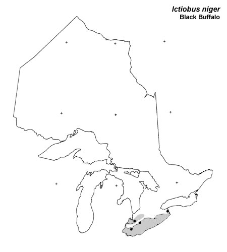 Black Buffalo range